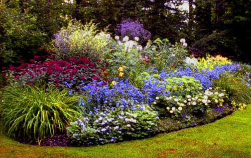 Uniti nella diversit decrescita felice social network - Foto di giardini fioriti ...