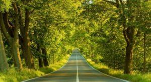 la-strada-immersa-nel-verde-460x250