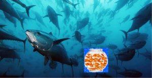 Che fine faranno i pesciolini rossi nell'oceano?