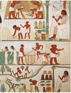 Foto 3 Scene di agricoltura nell'antico Egitto